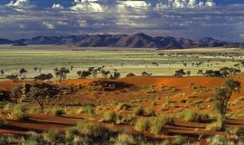 pustinya-tok-toki-namibiya